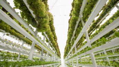 تصویر از مزرعههای عمودی تحولی شگرف در صنعت کشاورزی
