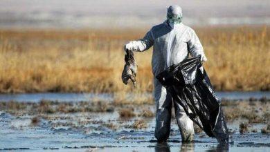 تصویر از آیا فاجعه زیست محیطی میانکاله این بار در بندر ترکمن در شرف تکرار است؟
