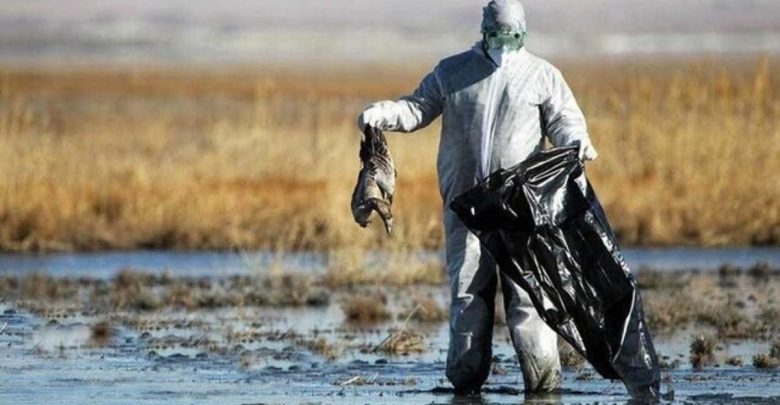 آیا فاجعه زیست محیطی میانکاله این بار در بندر ترکمن در شرف تکرار است؟