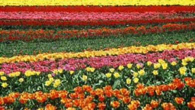 تصویر از سهم اندک ایران از صادرات جهانی گل و گیاه