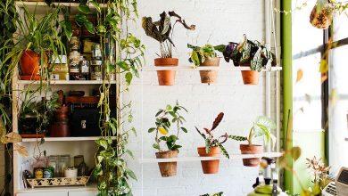 تصویر از ۸ تا از گیاهان آپارتمانی سایهدوست | از کروتون تا کالانکوئه