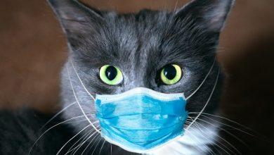 تصویر از آیا حیوانات خانگی میتوانند ناقل بیماری کووید-۱۹ باشند؟