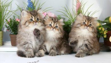 تصویر از دلایلی که شما را به نگهداری گربه در خانه ترغیب میکنند