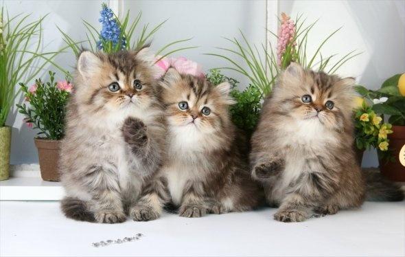 دلایلی که شما را به داشتن گربه در خانه، ترغیب میکند
