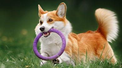 تصویر از ۱۰ روش عالی و مفرح برای بازی کردن با سگ