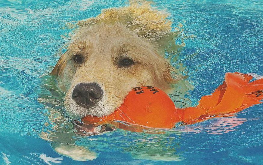 بازی کردن با سگ در آب