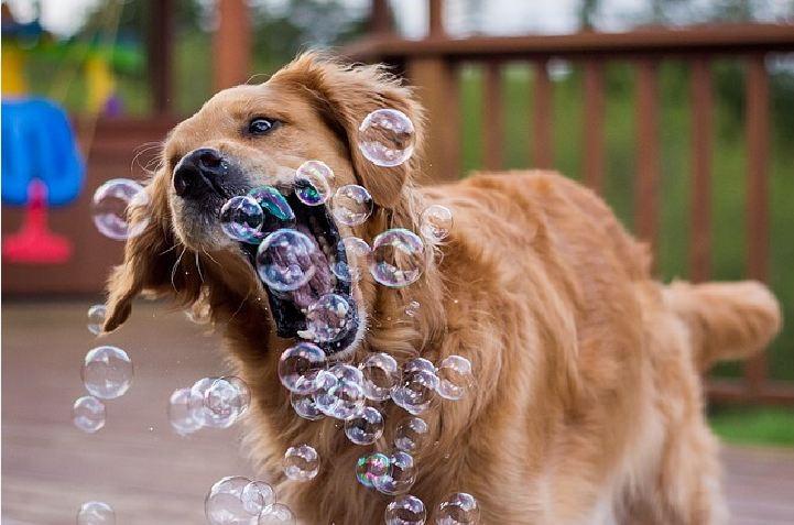 بازی کردن با سگ