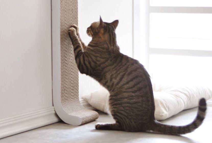 جلوگیری از چنگ انداختن گربه به لوازم خانه