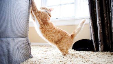 تصویر از ۱۱ روش برای جلوگیری از چنگ انداختن گربه به لوازم خانه
