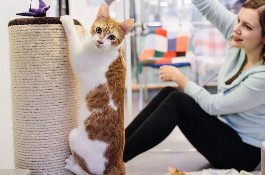 جلوگیری از چنگ زدن گربه به لوازم خانه (2)