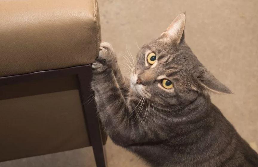 جلوگیری از چنگ زدن گربه به لوازم خانه