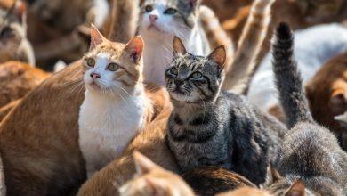 تصویر از باورهای غلطی که در مورد گربه وجود دارند