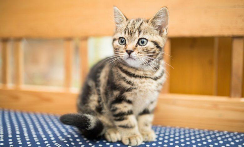 چه حرفهایی را نباید به کسی که گربه یا هر پت دیگری دارد، بزنیم؟