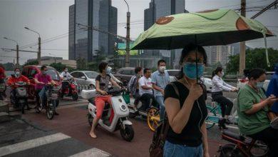 تصویر از آیا بیماری طاعون خیارکی در شمال چین شیوع پیدا کرده است؟