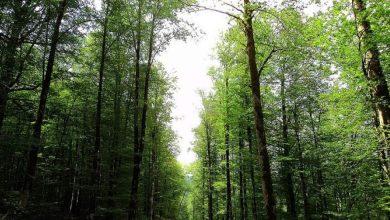 تصویر از ماجرا وقف جنگل آقمشهد چیست؟ | بررسی کامل ماجرایی به قدمت ۶ قرن