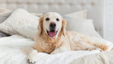 تصویر از ۷ تا از معیارهای انتخاب سگ | موقع انتخاب سگ این موارد را در نظر بگیرید