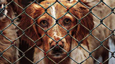 تصویر از بازار حیوانات اندونزی | سلاخی وحشیانهی حیوانات [فیلم +۱۸]