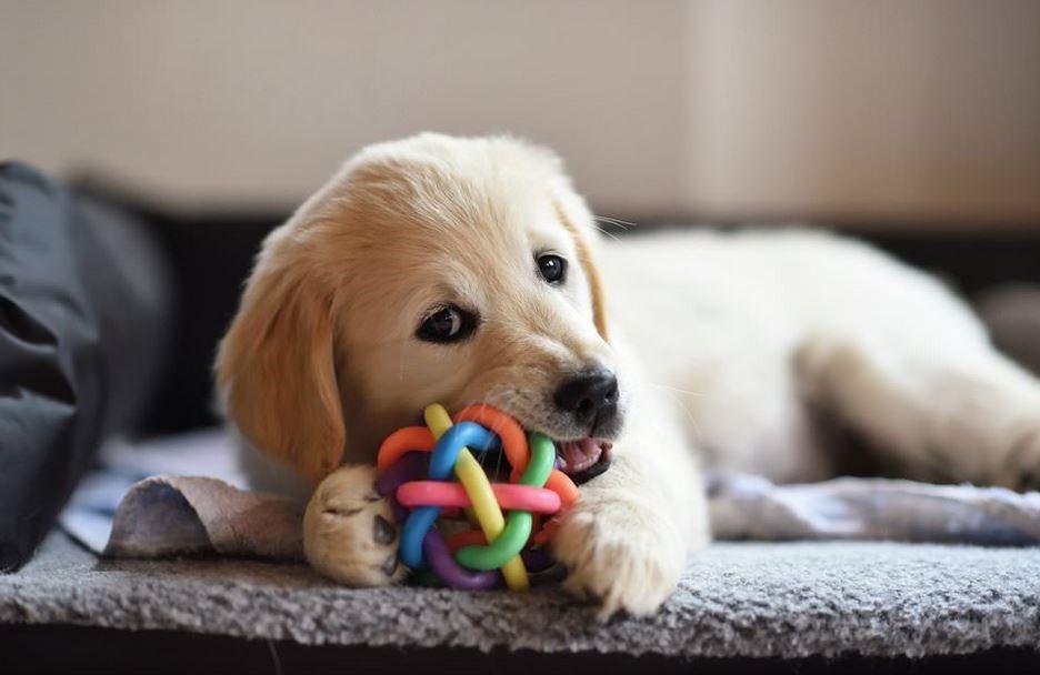 راهنمای نگهداری سگ در آپارتمان