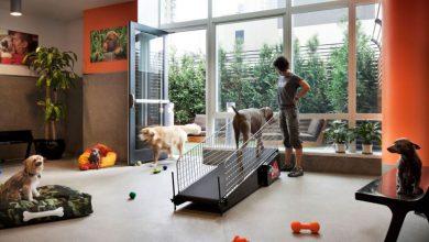 تصویر از راهنمای نگهداری سگ در آپارتمان | ۱۰ نکتهی کاربردی!