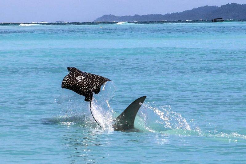 سواحل کیش میزبان یک موجود مرگبار