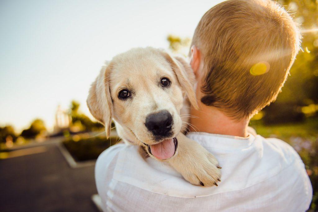 ابراز عشق سگ