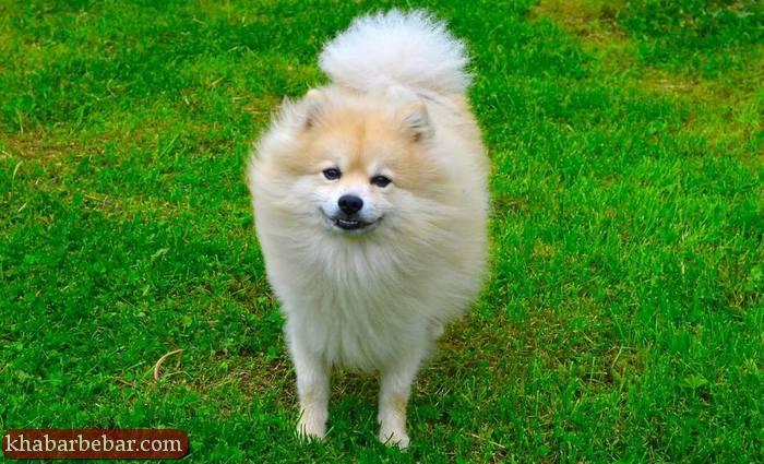 بهترین نژادهای سگ آپارتمانی