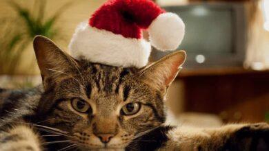 تصویر از نژاد شناسی گربهها | آشنایی با ۱۰ نژاد محبوب در گربهها