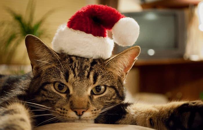 نژاد شناسی گربهها | آشنایی با 10 نژاد محبوب در گربهها