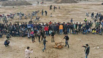 تصویر از عوامل جنگ خونین سگها در گلوگاه مازندران دستگیر شدند + عکس