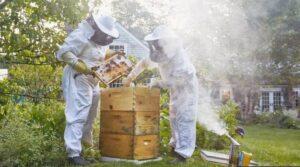 شرکت Best Bees به صاحبان خانهها اجازه میدهد در ازای پرداخت پول، کندوی زنبور عسل خود را داشته باشند.