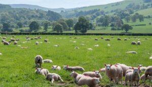 برخی از منابع سنتیتر درآمد مزرعه