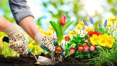 تصویر از چرا باغبانی برای سلامت روحی و جسمی شما بسیار مفید است؟