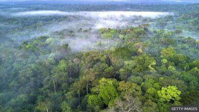 تصویر از فیسبوک درباره فروش غیرقانونی جنگلهای بارانی آمازون اقدام میکند